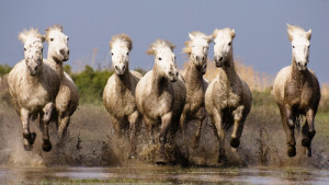 7 horses running